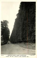 MEIKLEOUR BEECH HEDGE 'HEIGHT 100FEET, LENGTH 1/3 MILE, PLANTED 1746