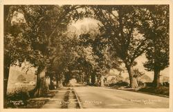 THE OAK AVENUE