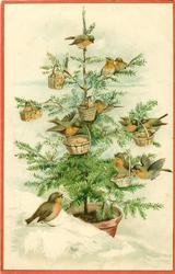 nine robins in Xmas tree hung with six baskets, one robin on bank beside