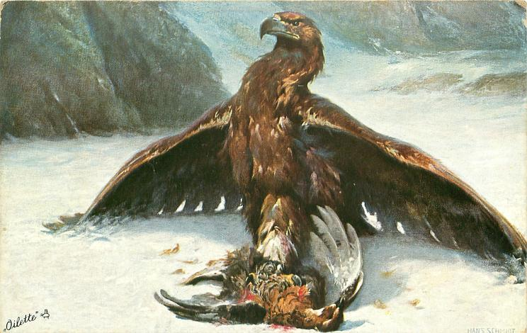 single eagle on snowy ground, wings extended, dead prey in front