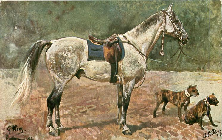 dappled gray horse faces right with two pit bulls in front