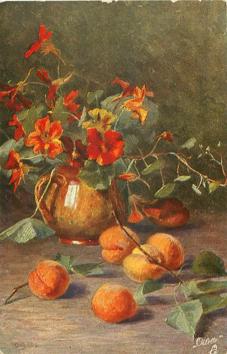 apricots on table, golden pot of nasturtiums