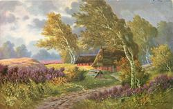 winding dirt road leading back to two thatched cottages silver birches blown by wind from right, heather both sides