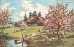 ten sheep grazing under flowering trees, water left with dock, house with fence behind