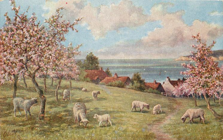 nine sheep grazing under flowering trees, village behind, water further behind