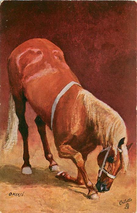 brown horse kneeling