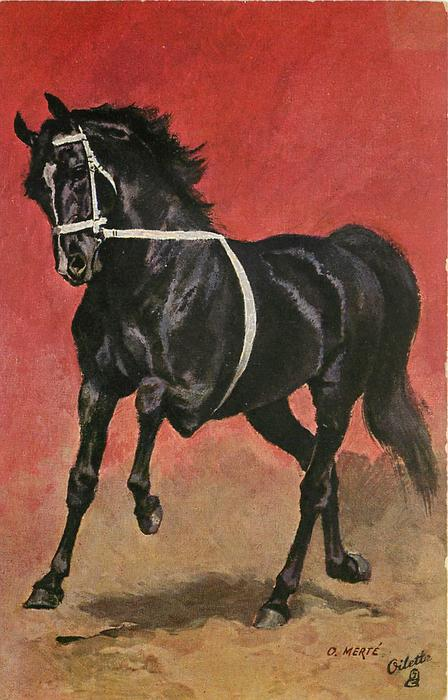 black horse with white ribbon around nose and body, facing left