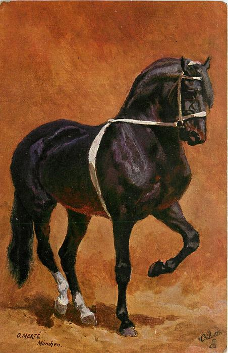 black horse with white ribbon around nose and body, facing right