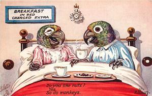 parrots  DO YOU LIKE NUTS?  YES  SO DO MONKEYS