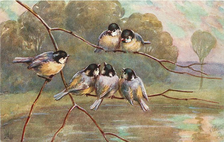 six tits, groups of two and four