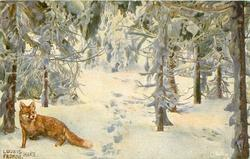 red fox in forest, hunters tracks in deep snow