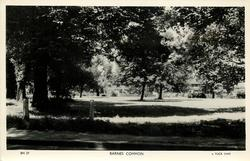 BARNES COMMON