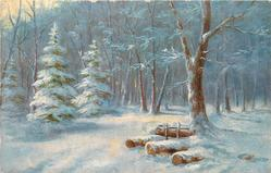 snow scene in woods, three conifers to left of path , logs and a deciduous tree to right