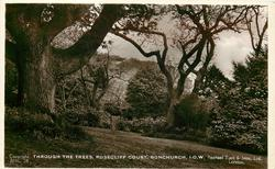 THROUGH THE TREES, ROSECLIFF COURT