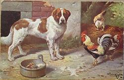st bernard dog on a farm with chicks and roosters