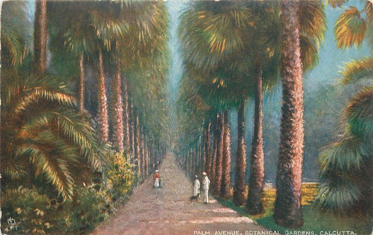 PALM AVENUE, BOTANICAL GARDENS