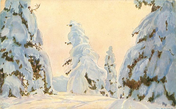 5 tall snow covered evergreen trees on either side of snow covered road