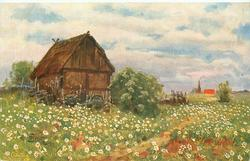 white daisies in meadow , thatched barn left, very distant church steeple right