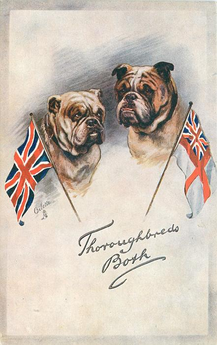 THOROUGHBREDS BOTH  two bulldogs between two flags