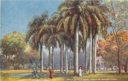 GROUP OF PALM TREES, ESBEKIEH GARDEN, CAIRO