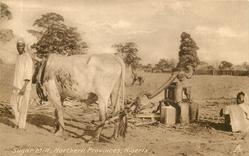 SUGAR MILL, NORTHERN PROVINCES, NIGERIA