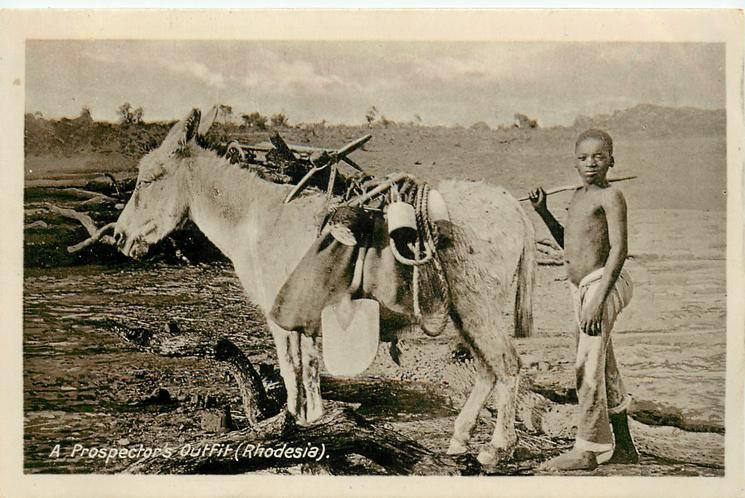 A PROSPECTOR'S OUTFIT, A mule & boy