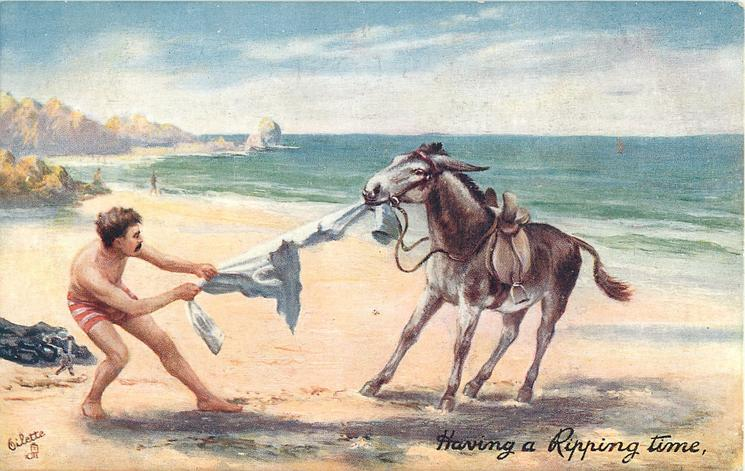HAVING A RIPPING TIME  inscr. at lower right-donkey pulls mans shirt, man in shorts only