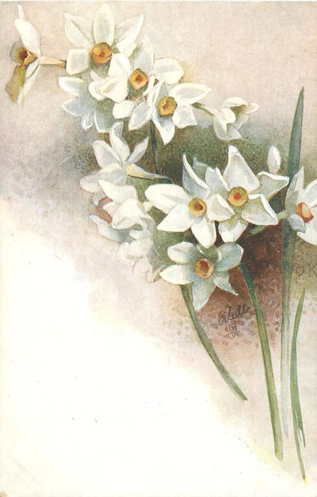 many white narcissi, two stems,two leaves, to right bottom, initials center right edge