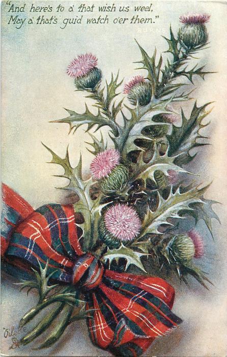 thistles in flower,stalks to left, red tartan bow, no gemstone
