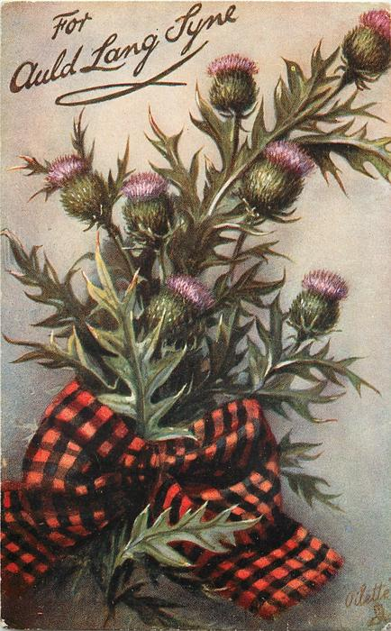 FOR AULD LANG SYNE thistles in flower, no gemstone on tartan bow, stalks centre left