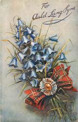 FOR AULD LANG SYNE  blue campanulas, gemstone on red tartan bow