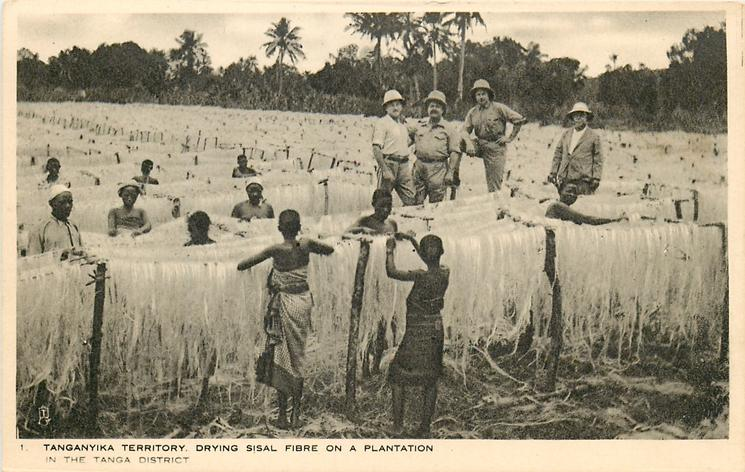 DRYING SISAL FIBRE ON A PLANTATION IN THE TANGA DISTRICT