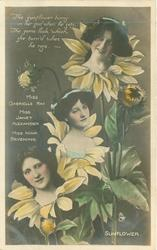 SUNFLOWER, 3 insets, GABRIELLE RAY, JANET ALEXANDER, NINA SEVENING, THE SUNFLOWER HUNG /ROSE