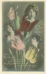 TULIP, 3 insets, 3 insets, MISS PHYLLIS DARE, MISS MARIE STUDHOLME, MISS GAYNOR ROWLANDS TULIPS BLOOM/FLOWER