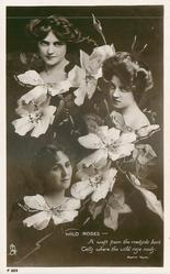WILD ROSES-MAIE ASH, VIOLET LORAINE, LETTICE FAIRFAX  A WAFT FROM THE ROADSIDE BANK TELLS WHERE THE WILD ROSE NODS. BAYARD TAYLOR