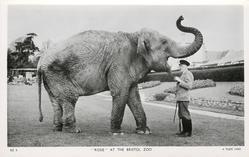 """""""ROSIE"""", elephant"""