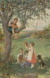 SCHENK UNS AUCH APFEL boy sits in tree with basket of apples, girl below stands holding up her basket, 2 others sit observing
