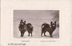 """""""BELLE BROCADE"""" AND """"PEGGY OF THE POTATO PATCH"""", WITH PRETTY COATS & DAINTY THE LITTLE POMS OF GEO. R. SIMS"""