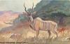 KHUDU VERHOFFEND. SUD-WEST AFRICA
