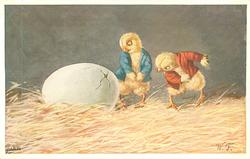 two chicks observe egg beginning to hatch