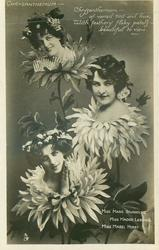 CHRYSANTHEMUM, 3 insets, MARIE STUDHOLM, MADGE LESSING, MABEL HIRST, CHRYSANTHEMUMS/VIEW