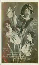 TULIP, 3 insets, MISS PHYLLIS DARE, MISS MARIE STUDHOLME, MISS GAYNOR ROWLANDS, GAY TULIPS BLOOM/FLOWER