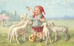 girl stands holding up grass, five lambs around, three chicks below