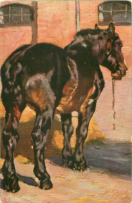 Brown Black Horse Stands Facing Away In Yard Tuckdb