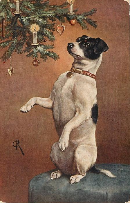 terrier  in begging pose  on stool under christmas tree branches