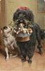large black poodle carries four terrier pups in basket, mother sits alongside