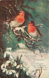 CHRISTMAS GREETINGS (two robins on branch, snowdrops below)