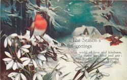 THE SEASON'S GREETINGS (robin on white flowers, house in snowy background)