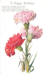 A HAPPY BIRTHDAY  three carnations, two pink & one red