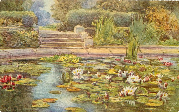 pond with lily-pads and flowers in water, steps behind